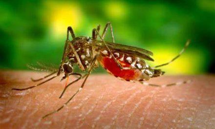 El condado Hidalgo reporta 4 casos de el virus del Nilo Occidental y 3 personas dieron positivo por la fiebre del Dengue