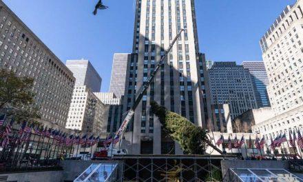 Llega a Nueva York el árbol de Navidad del Rockefeller Center