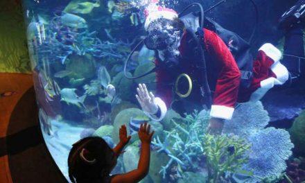 Santa Claus se sumerge con los peces en acuario tailandés