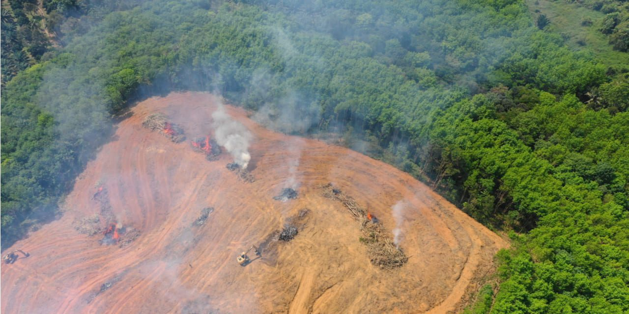 La Deforestación en la Amazonía alcanza mayor nivel desde 2008
