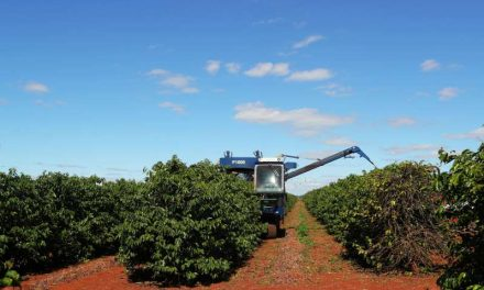 Cosecha de café Brasil caería un 23% en 2021