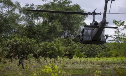 Colombia erradicó 130.000 hectáreas de coca en 2020