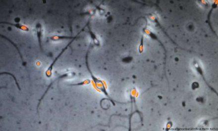 Nuevo estudio sugiere que el COVID-19 podría alterar la calidad del esperma