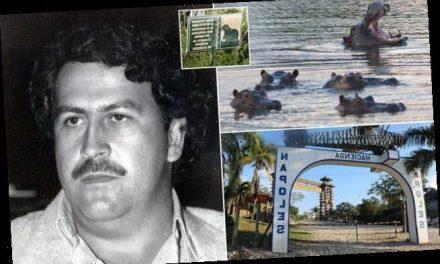 Recomiendan sacrificar a los hipopótamos que Pablo Escobar trajo a Colombia