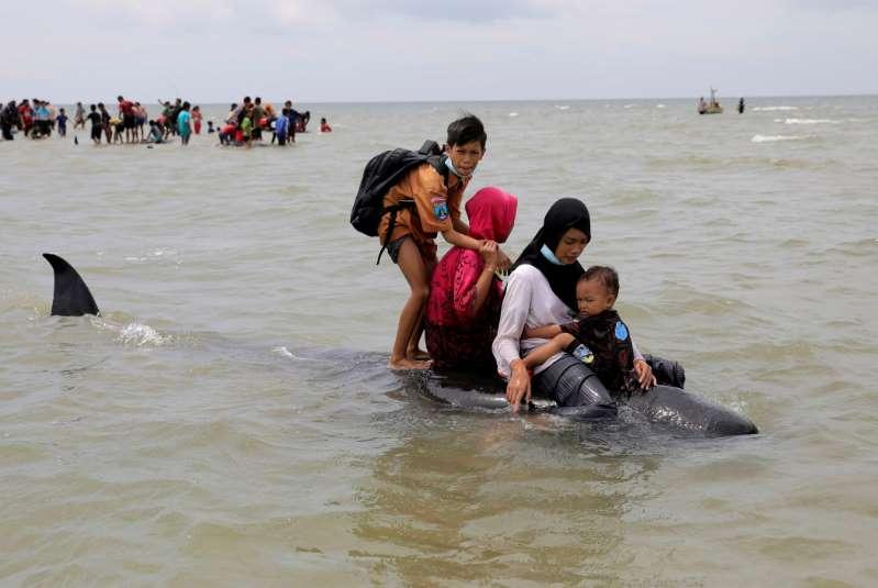 Mueren 42 ballenas tras quedar varadas en isla de Indonesia