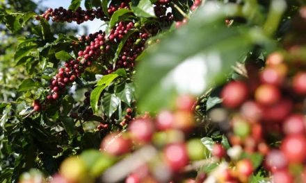 Colombia incrementa en 3 % la producción y exportación de café en enero