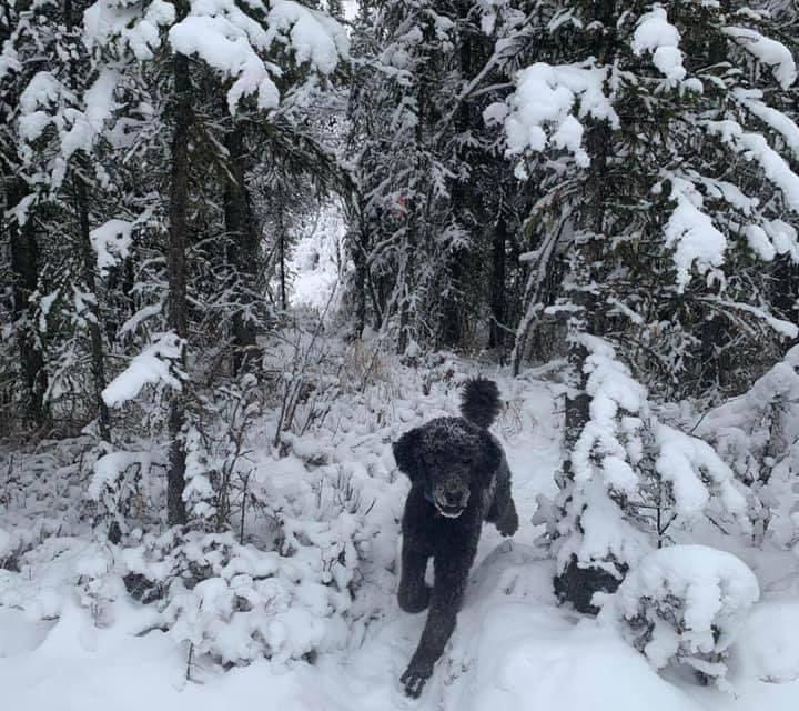 ¿Es un hombre o un perro lo que camina entre la nieve?