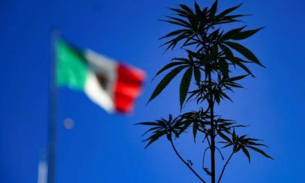 Diputados mexicanos avalan y regresan al Senado ley para consumo de marihuana