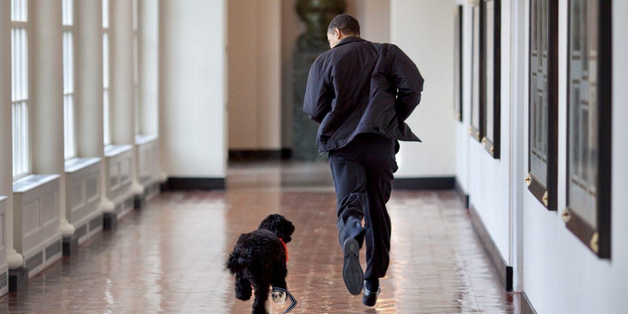 Barack Obama anuncia la muerte del perro Bo