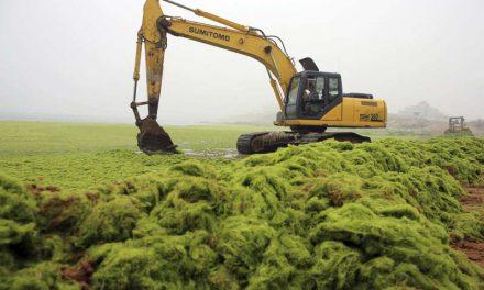La ciudad china de Qingdao sufre la mayor invasión de algas de su historia