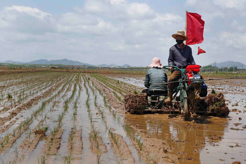 Seúl: Corea del Norte libera reservas de arroz por escasez