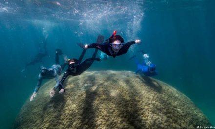 Hallan en Australia un enorme coral cupular que tiene al menos 400 años de vida