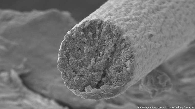 Científicos crean fibras musculares sintéticas para usarlas en textiles